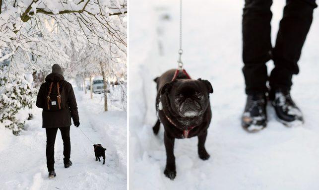 portland snowday_0002