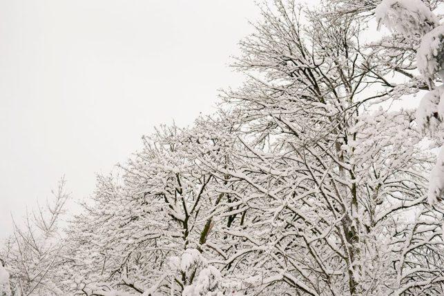 portland snowday_0005
