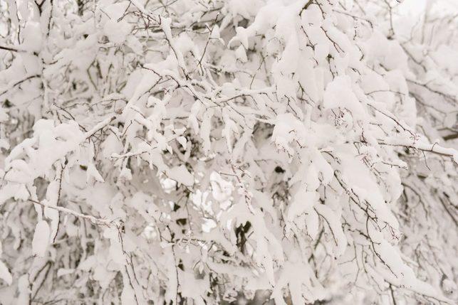 portland snowday_0006